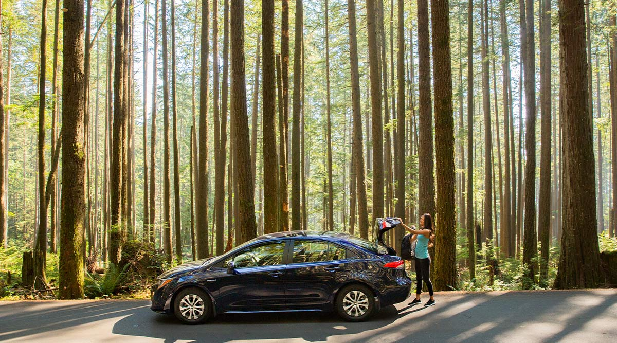 Corolla outdoors photo